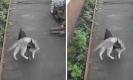 ไม่ไหวพี่ช่วย!เมื่อแมวไม่ยอมกลับบ้านงานนี้พี่หมาช่วยแบกเอง!!