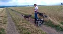 น่ารัก! เหล่าน้องหมาในวีลคาร์ทเล่นคาบกิ่งไม้