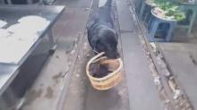 มัชเฌ หมาแสนรู้ พาลูกๆเดินเที่ยวตลาด