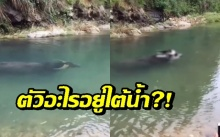 ตัวใหญ่ๆใต้น้ำนึกว่าโลมา แต่พอโผล่ขึ้นมาเท่านั้นแหละ ไม่คิดว่าจะเป็นสัตว์ชนิดนี้!! (คลิป)