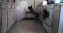 เก่งเวอร์! น้องหมาเปิดตู้เย็น หยิบน้ำมาให้เจ้านาย