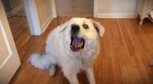 หมาสุดแป้ก! กระโดดงับอาหารไม่โดนเลยสักคำ!