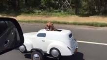 แว๊บแรกนึกกว่าหมาขับรถ