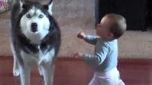 หมา เถียงกับ เด็ก ฮาๆ น่ารักมาก