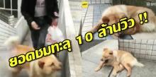 ยอดชมทะลุ 10 ล้านวิว สุนัขมาส่งเจ้านายแล้วรอหน้าสถานี12ช.ม. รับกลับทุกวัน
