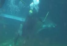 หวาดเสียว!!ฉลามงับจนท.พิพิธภัณฑ์ฯ แขนเหวอะหวิดขาด