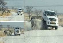 ระทึก! แรดวิ่งชนรถนักท่องเที่ยวในอุทยานแห่งชาติที่นามิเบีย