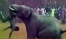 ช้างขี้โมโหถูกขว้างหินไล่ อาละวาดฆ่าชาวบ้านตาย 5คน