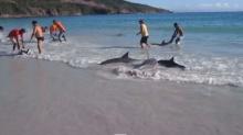 นักท่องเที่ยวอึ้ง ! โลมา 30 ตัว เกยหาดต่อหน้าต่อตา ได้ภาพสุดหายากประทับใจ