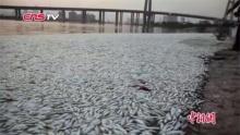 ปลาตายเกลื่อนที่จีน หลังเหตุระเบิดโกดังเก็บสารเคมี