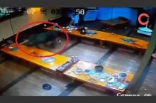 ลูกค้าแตกฮือ! หมูป่าวิ่งหลุดเข้าร้านอาหารในเกาหลี (ชมคลิป)