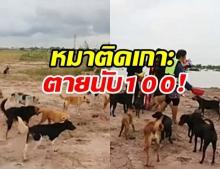 วอนช่วย หมาติดเกาะ 500 ตัว จมน้ำตายนับร้อย ได้ยินเสียงร้อง แต่ช่วยไม่ได้ !