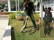 ผงะงูเหลือมเลื้อยขึ้นยอดต้นหมาก พบบาดเจ็บหมดแรงหนี
