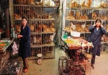 สื่อนอกแฉเบื้องหลังที่มาของเนื้อไก่ราคาถูกในจีน