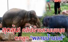 หาดูยาก!! เปิดวินาที! ช้างน้อยลืมตาดูโลก พลายน้ำมนต์ ลูกช้างสวนนงนุช