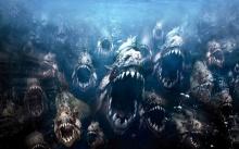ไม่น่าเกิน 5 นาที..!! ถ้าตกไปในน้ำที่มี ปิรันย่า คุณคิดว่าคุณจะรอดไหม (ชมคลิป)
