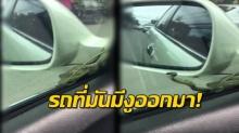 สาวกรี๊ดลั่น!! เมื่อจู่ๆงูเลื้อยโผล่บนรถ ทำหวาดเสียวกันทั้งถนน!! (คลิป)