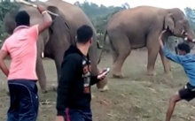 เซลฟี่มรณะ!! อยากถ่ายรูปกับช้างสุดท้ายถูกงวงฟาด ไล่กระทืบ!! (คลิป)