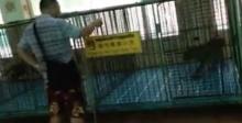 """สุดจะทน.!!! สาวไทยขอแฉ พฤติกรรมสุดแย่ ของ""""นักท่องเที่ยวจีน"""" ที่สวนเสือศรีราชา"""