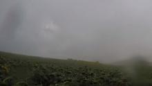 คลิปภาพ ฝนถล่มไร่ทานตะวันมณีศรี จนต้องสักปิด