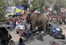 นาทีระทึก!!ช้างป่าบุกเข้าเมืองอาลวาดทำลายข้าวของ!!