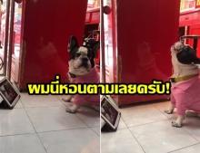 ชาวเน็ตขำหนักมาก! เมื่อสุนัขบูลด็อก ฟังเพลงสคูบี้ดูของ แน็ก ชาลี
