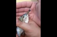 ชาวเน็ตถล่ม2หนุ่มเล่นพิเรนทร์ จับปลาสูบกัญชาก่อนปล่อยน้ำ (ชมคลิป)