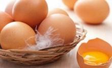 สัตวแพทย์ชี้แจง! พยาธิในไข่แทบเป็นไปไม่ได้