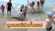 หวาดเสียว! หนุ่มจูง จระเข้ มาเล่นน้ำทะเล เด็กน้อยเอามือจับเล่นไม่กลัวตาย (คลิป)