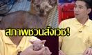 ทีมช่วยแมว เผยนาทีพังประตูคาเฟ่นรก ผงะกลิ่นคลุ้ง พิการเพียบ!(คลิป)