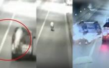 วงจรปิดจับภาพหมูกระโดดหนีจากรถขนส่งไปโรงเชือด แต่ก็ไม่รอดถูกเก๋งชนตาย!! (คลิป)