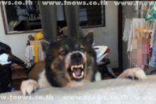 สุนัขยอดกตัญญู โดดขวาง จนท. ขณะจับเจ้าของ เหตุคิดว่าเจ้าของจะถูกทำร้าย