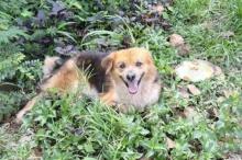 น้องหมา สุดดีใจ พบเจ้าของ หลังนั่งคอยริมทางกว่า 7 เดือน