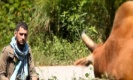 เพลง มหาลัยวัวชน เวอร์ชันอินเตอร์เพราะดีนะ!