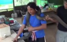 ฝรั่งอ้าปากค้าง!  หนุ่มไทยจับงูยักษ์ ด้วยมือเปล่า