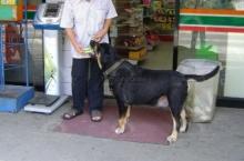 เจ้ารถถัง สุนัขแสนรู้ คาบเงินไปซื้อขนมทุกวัน
