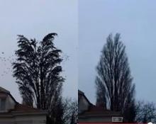 เหลือเชื่อ! ต้นไม้ต้นนี้ไม่ใช่ต้นไม้ธรรมดา จับตาดูให้ดีแล้วคุณจะตกใจ!