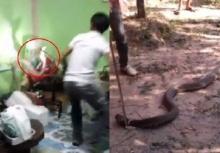 แอบหลอน!!งูจงอางตัวยักษ์ 2ตัว เลื้อยเข้าบ้าน 2 วันติดๆ