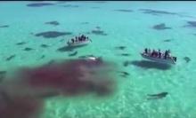 หาดูยาก ฉลามเสือ 70 ตัว รุมกินปลาวาฬที่ตายในอ่าวฉลาม