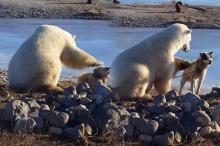 น่ารักน่าเอ็นดู!!!  โมเม้นน้องหมีโพลาร์กับเจ้าสี่ขา เห็นแล้วยิ้มไม่หุบเลย