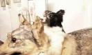 หมาสองหัว การทดลองชวนช็อกแห่งประวัติศาสตร์