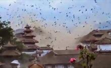 สุดน่ากลัว จตุรัสดูร์บาร์ถล่ม นกนับพันตัวแตกตื่นบินว่อนตอนแผ่นดินไหวที่ เนปาล