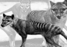 5 สิ่งมีชีวิตที่เชื่อกันว่าสูญพันธุ์ไปแล้ว... แต่อาจจะยังคงมีอยู่