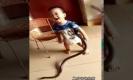 ขนลุก!! คลิปเด็กน้อยเล่นกับงู จับเหวี่ยงไปเหวี่ยงมา