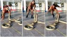 สุดหวาดเสียว คนล้อเล่นกับงู !! จงอางยักษ์ 2 ตัว