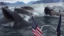 คลิปเหลือเชื่อ!! ฝูงวาฬหลังค่อมโผล่ห่างจากเรือไม่กี่ฟุตที่อลาสก้า