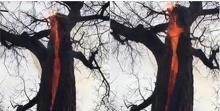 งงเลย!!เปลวไฟลุกภายในต้นไม้ เกิดขึ้นได้ไงนี่!?