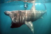 ตะลึง! 8 พันธ์ฉลามสุดแปลกชวนสยอง ที่มีอยู่จริงบนโลกใบนี้!!