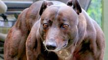 10 สัตว์เลี้ยงสุดแปลกประหลาด!!