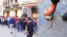 สงครามขว้างหนู เทศกาลพิสดารจากสเปน!!!